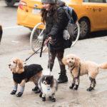 Leggings for Dogs?