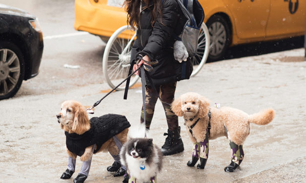 Leggings for Dogs?