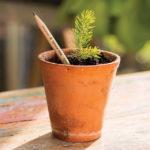 The Plantable Pencil Saga